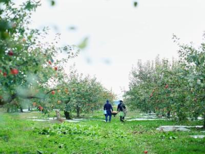 りんご 新庄