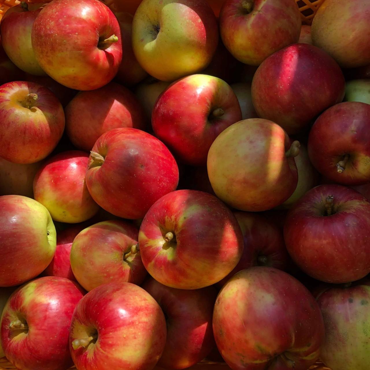 りんご 無農薬