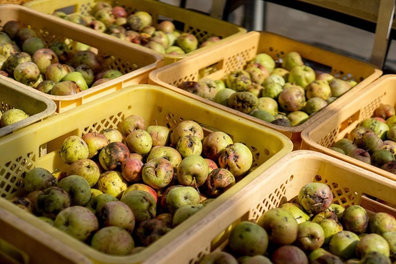 りんごジュース 無農薬 山形