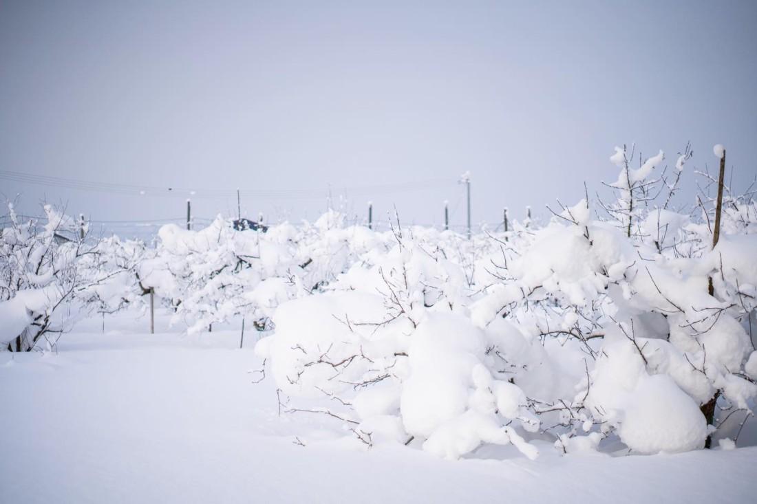 大雪 山形