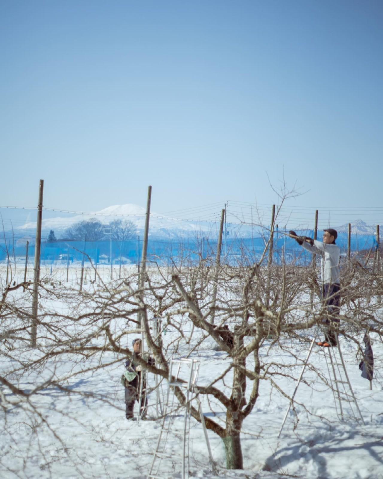 有機栽培 りんご