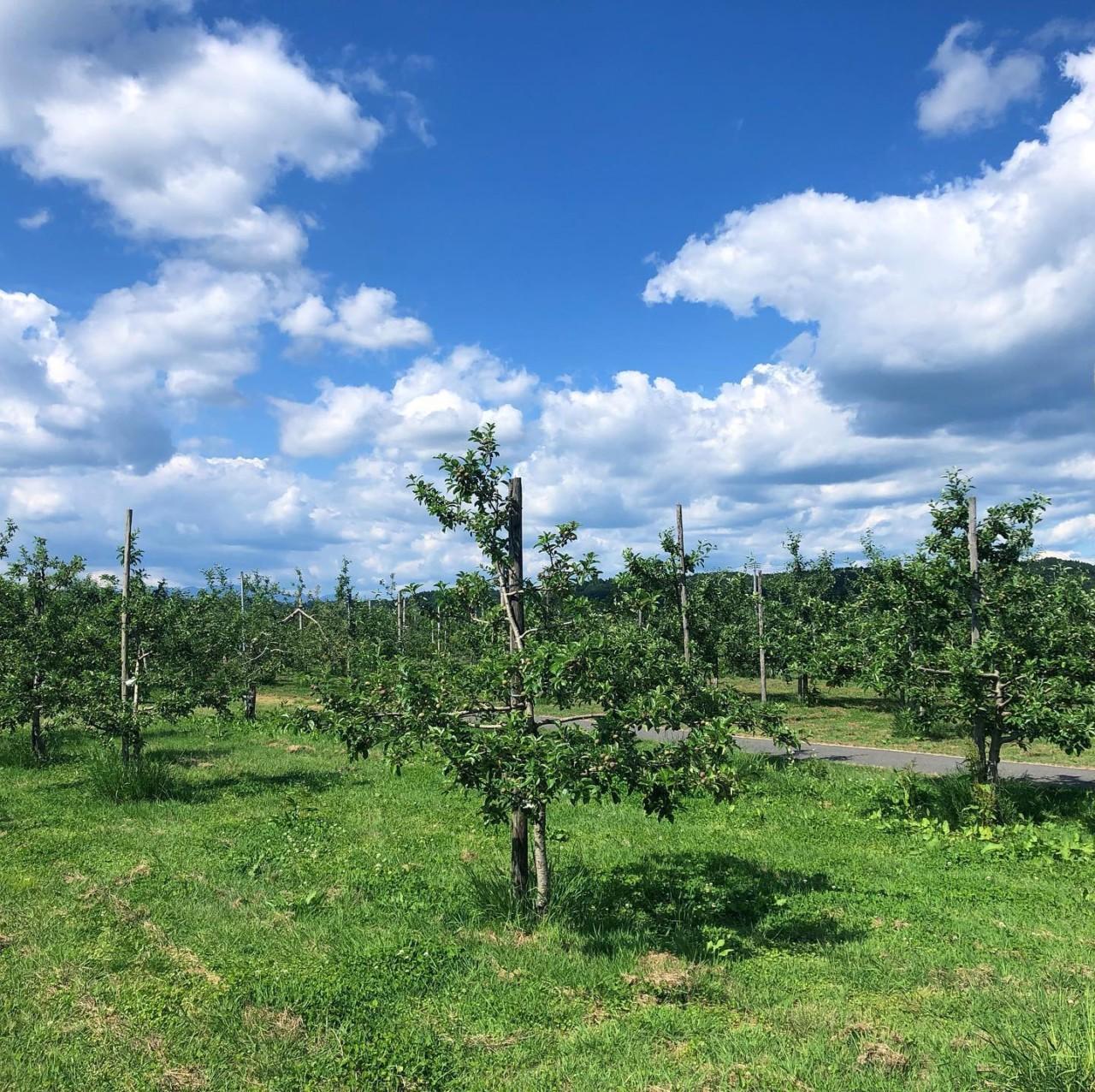 有機栽培 リンゴ