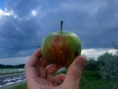 オーガニック りんご